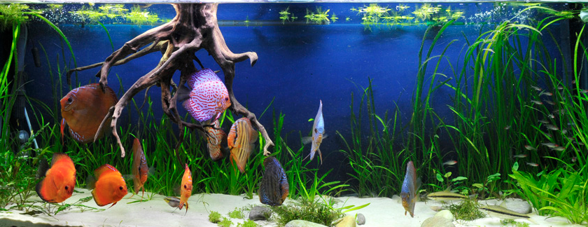 discus tank substrate