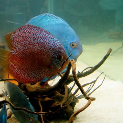 how to get a great deal on a discus fish aquarium