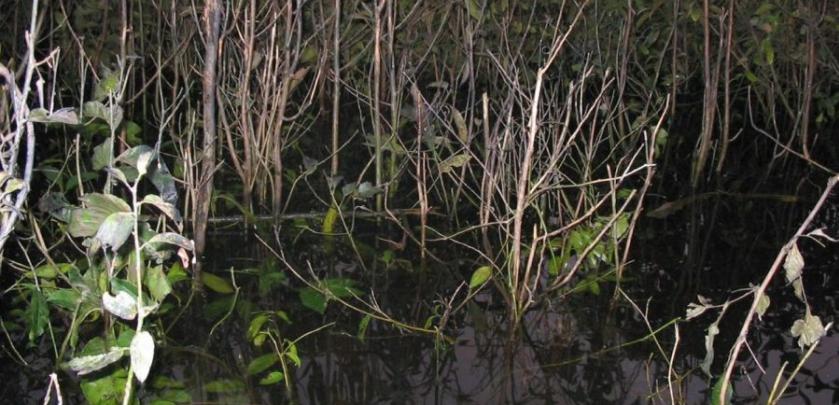 discus natural habitat