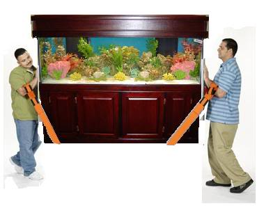 how to move an aquarium