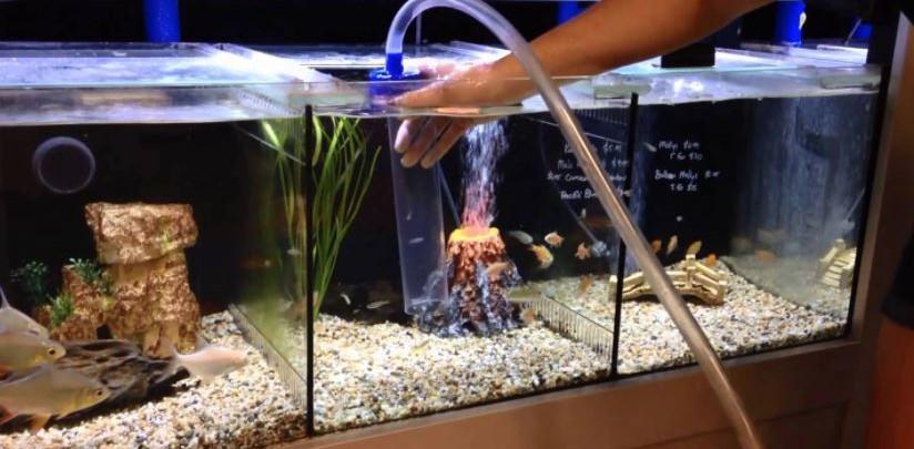 how to clean aquarium gravel