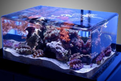 aquarium buying guide