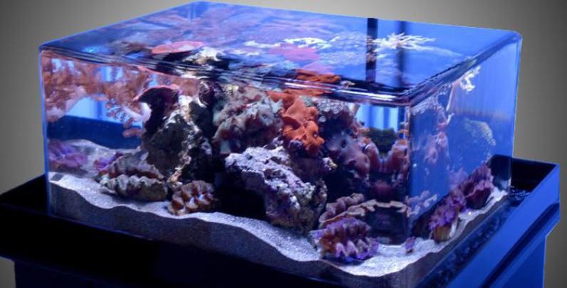aquarium buying guide