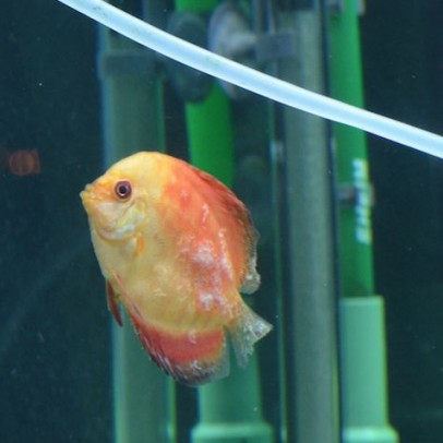 fish fungus