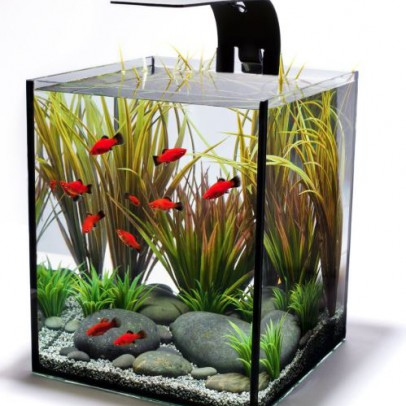 health benefits of aquariums