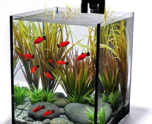 health benefits of aquariums