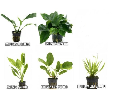 live potted aquarium plant bundle