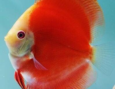 marlboro red discus