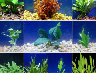large live aquarium plant bundle