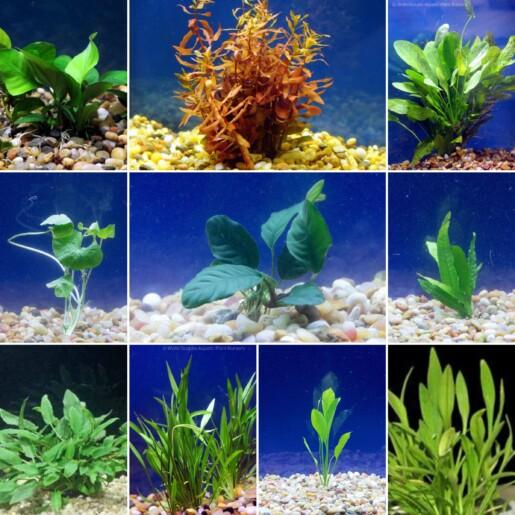 large live aquarium plant bundle
